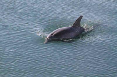 come dormono i delfini
