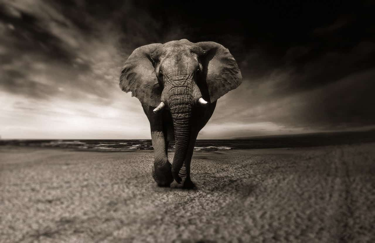 Elefanti, esseri senzienti (Foto Pixabay)