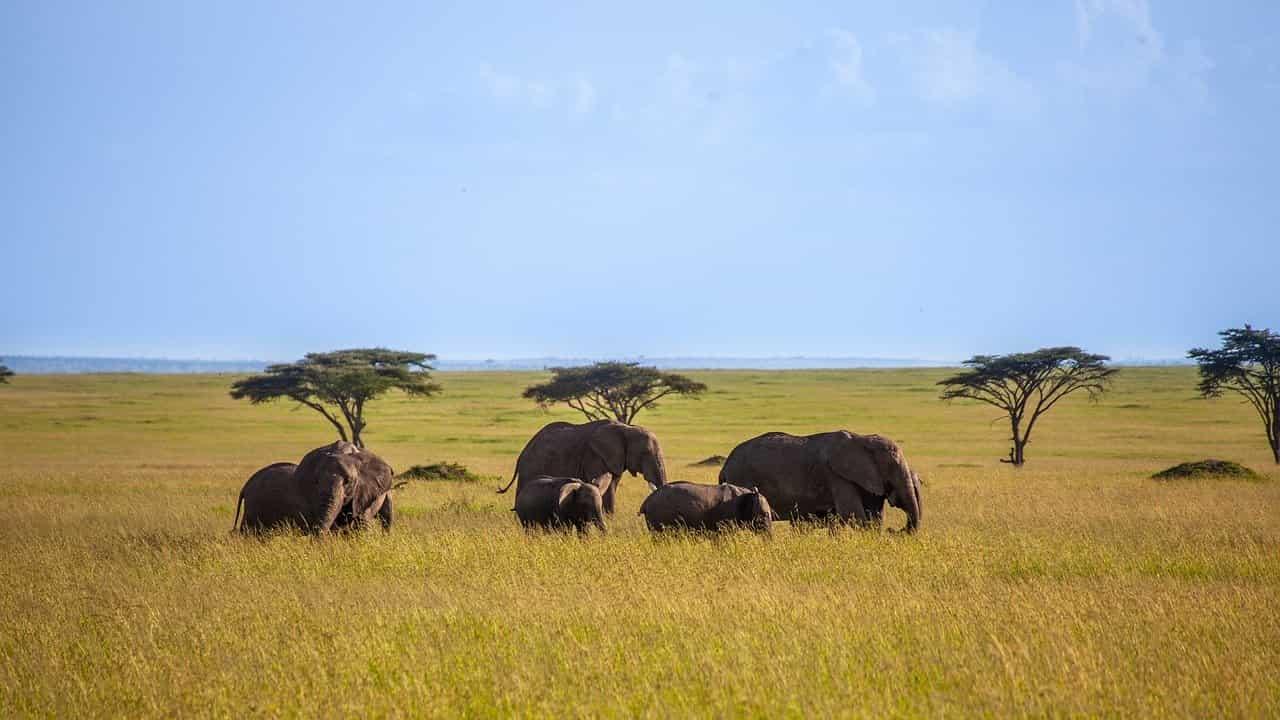 Elefanti nella savana (Foto Pixabay)