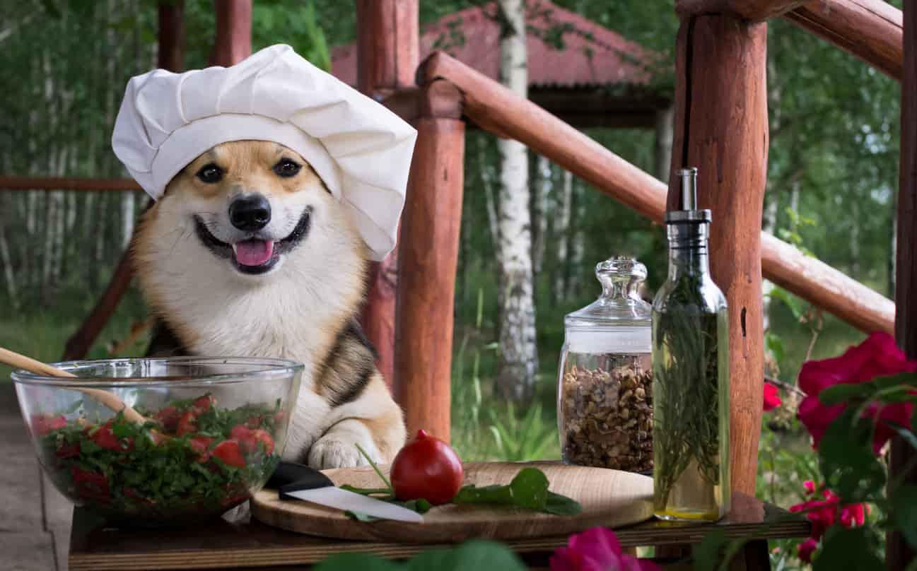 erbe aromatiche spezie salutari cane