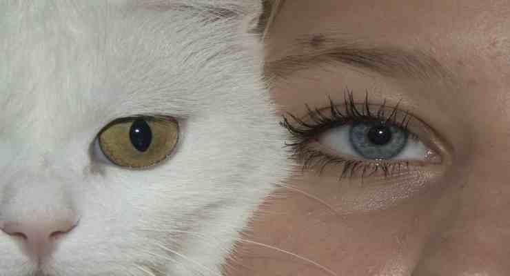 Amicizia tra uomo e animale (Foto Pixabay)