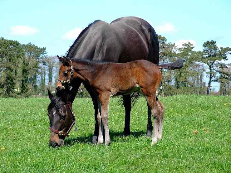 glossario cavalli