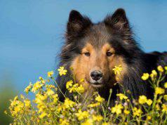 fiori bach cane