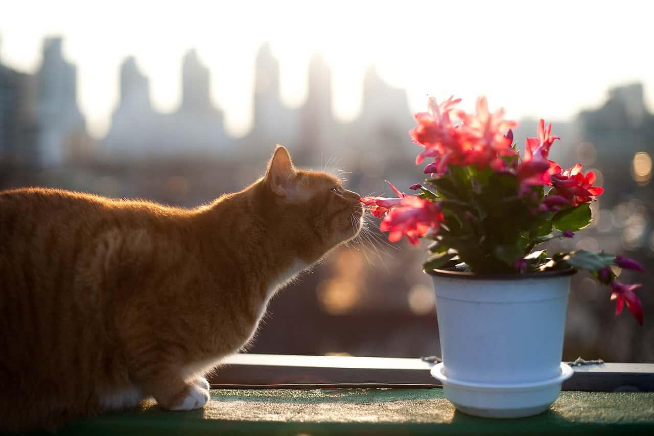fiori bach gatto