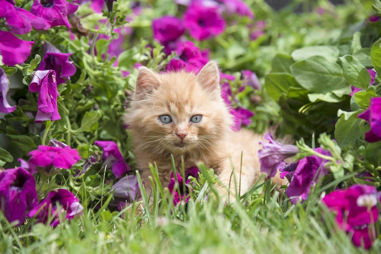 fiori gatto
