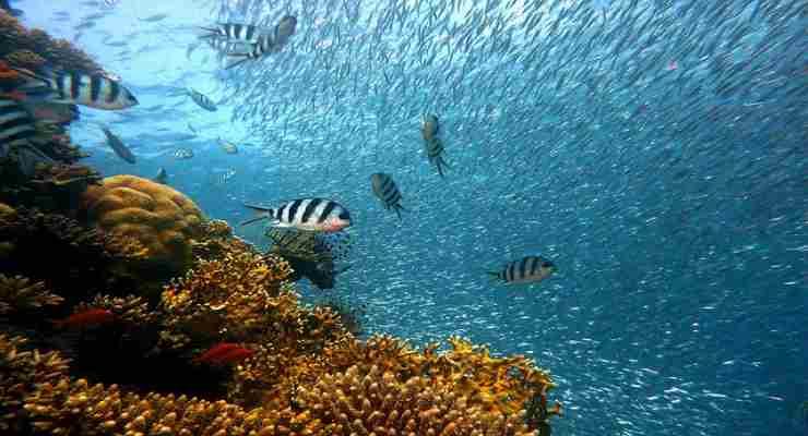 Pesci, un'importanza non premiata in natura (Foto Pixabay)