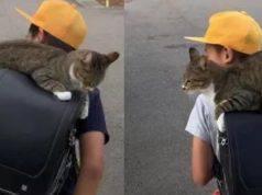 gatta accompagna bambino