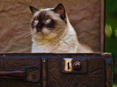 rimedi naturali gatto anziano