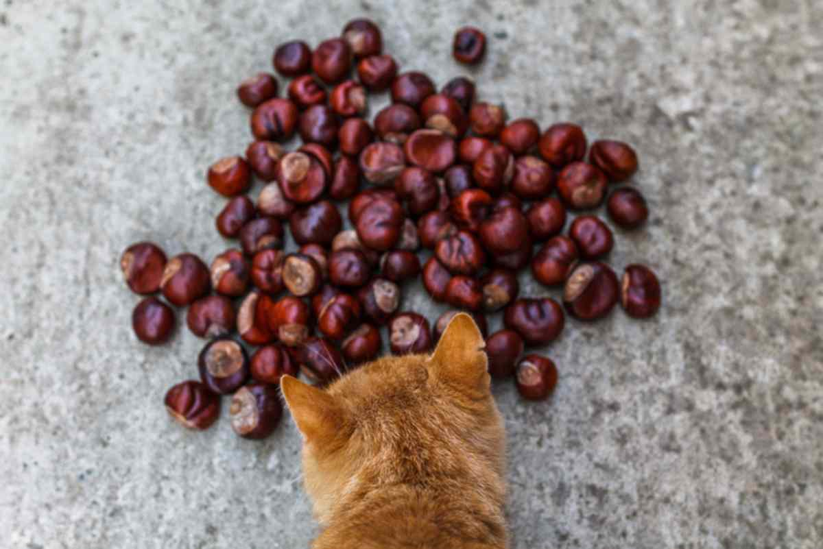 gatto puo mangiare castagne