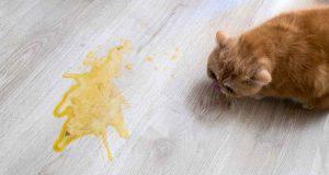 gatto che vomita