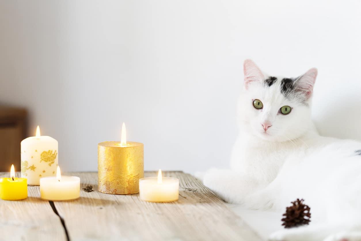 Gatto e pericoli di Natale