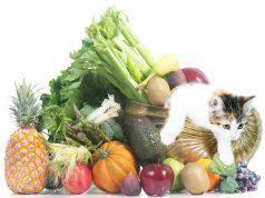 Gatto vegetariano o vegano