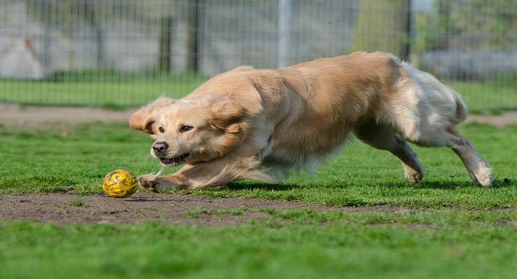 La gioia dei cani (Fonte Pixabay)