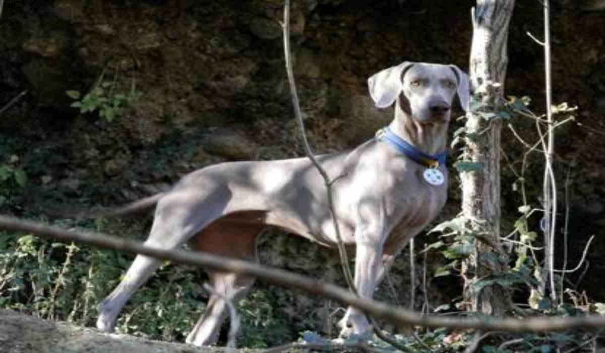 Greta il cane eroe (Foto dominio pubblico)