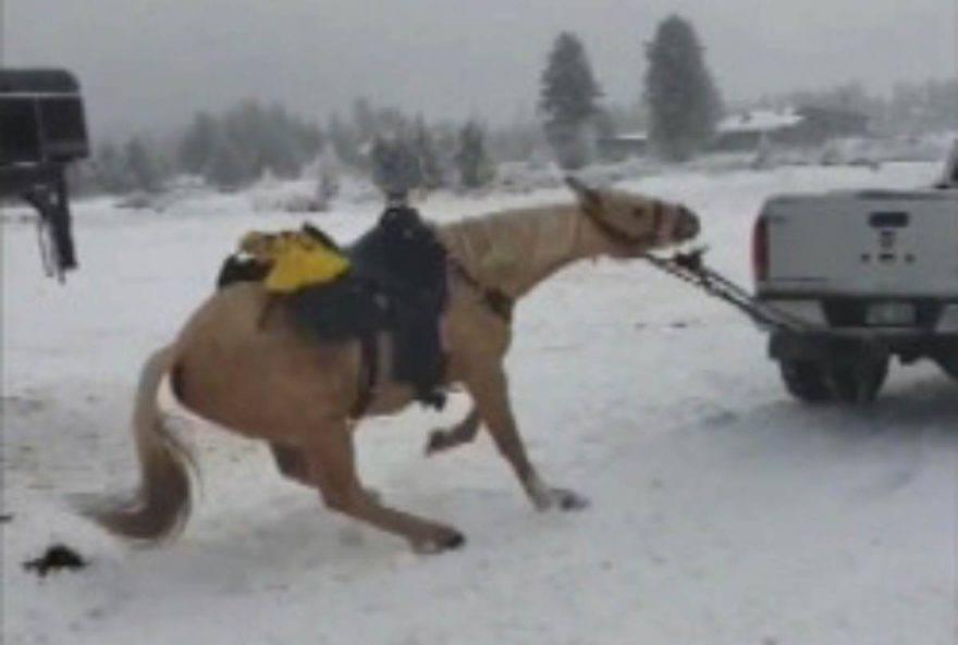 cavallo trascinato da camion