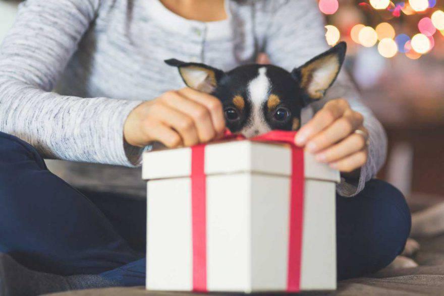 Regali di Natale per cani