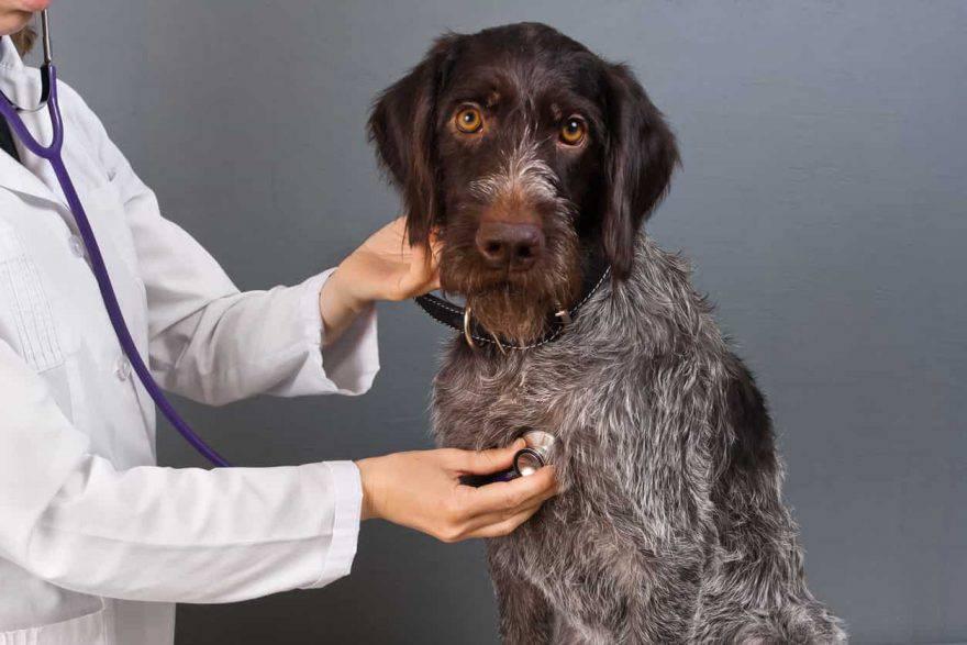 esami clinici cane