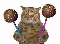 Il gatto ha mangiato cioccolato