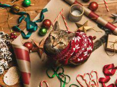 regali natale fai da te gatti