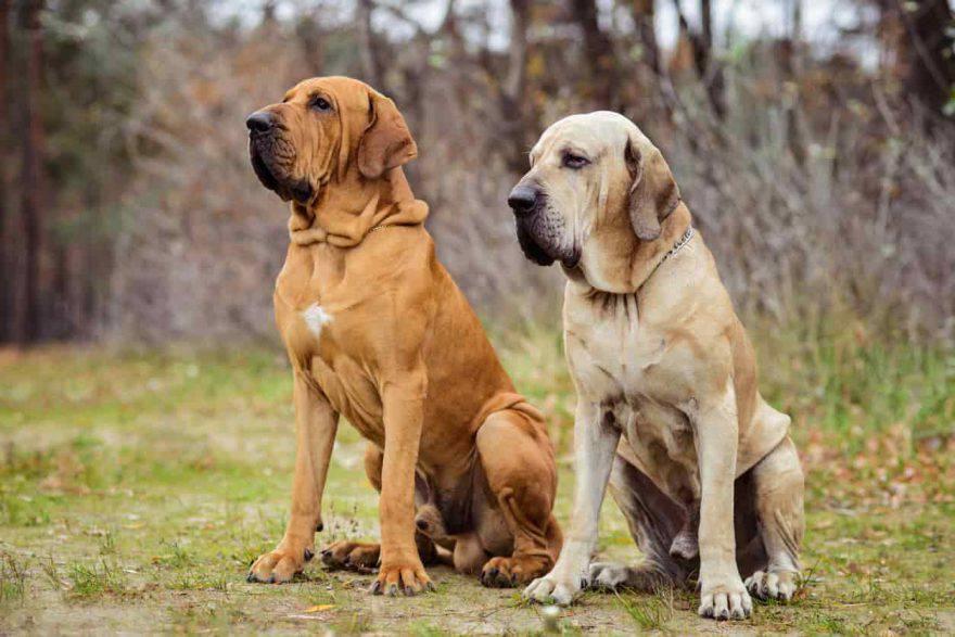 Cani latinoamericani