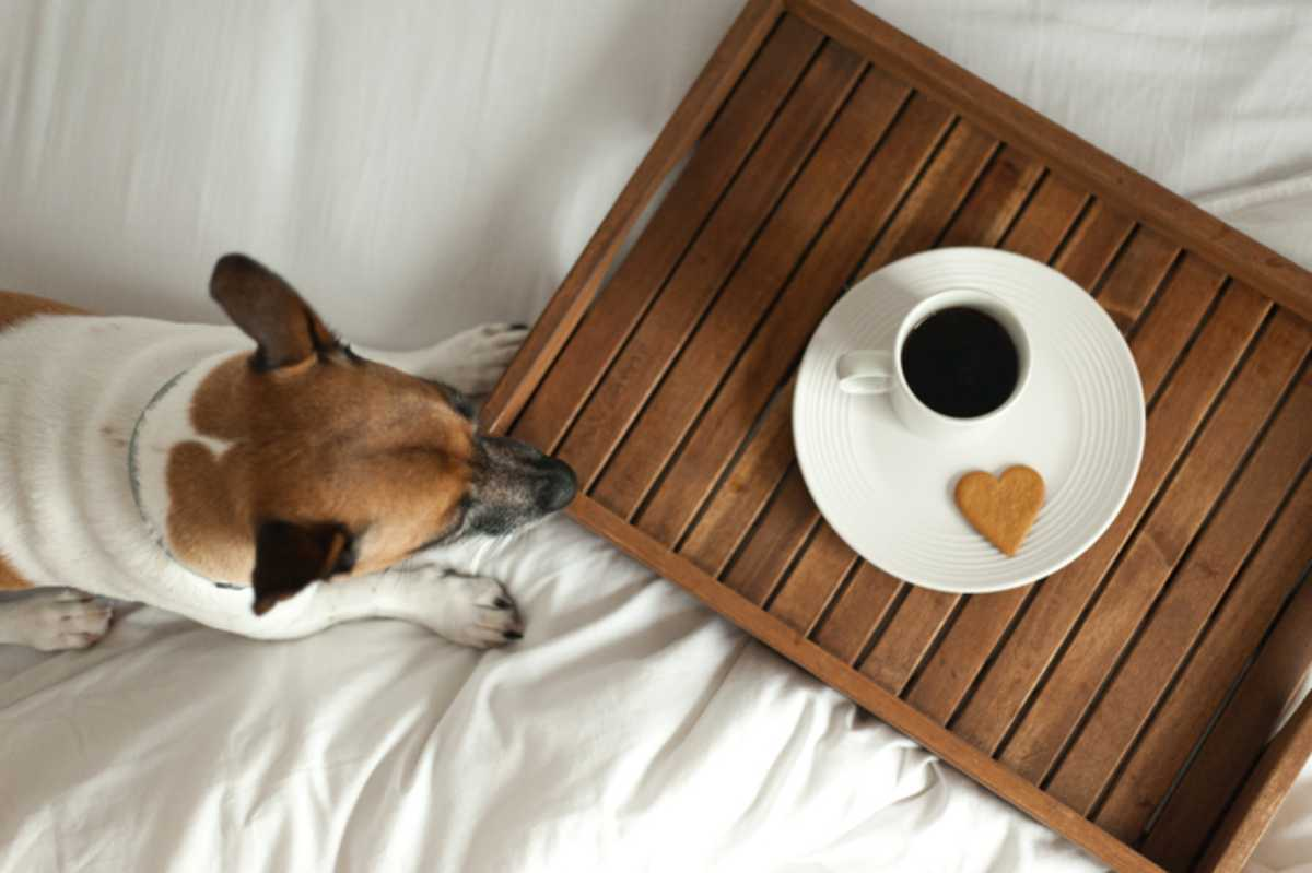 cane puo bere caffe