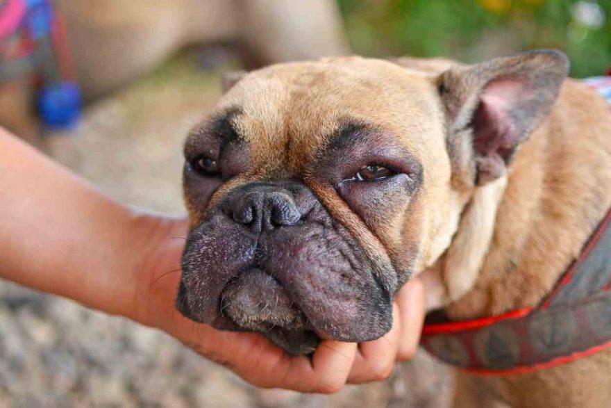malattia dei reni in casa dieta alimentare cane