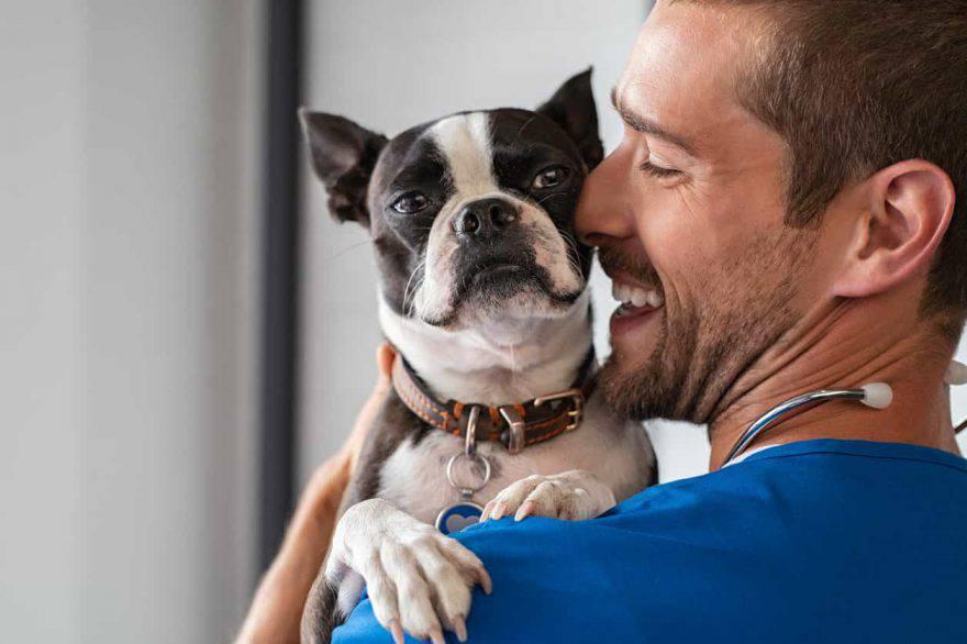 scegliere veterinario cane