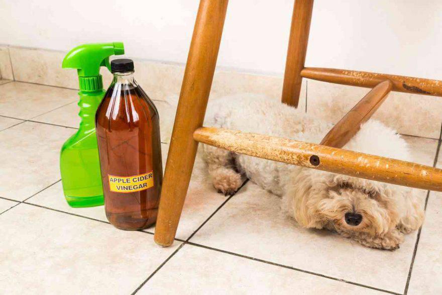 Lavare il cane con l'aceto