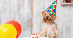 calcolare età cane nuova formula