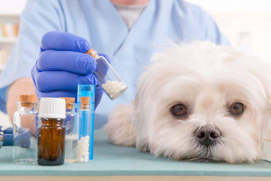 farmaci umani al cane