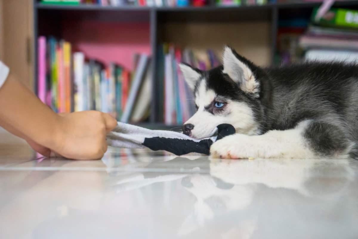 cane ruba i calzini