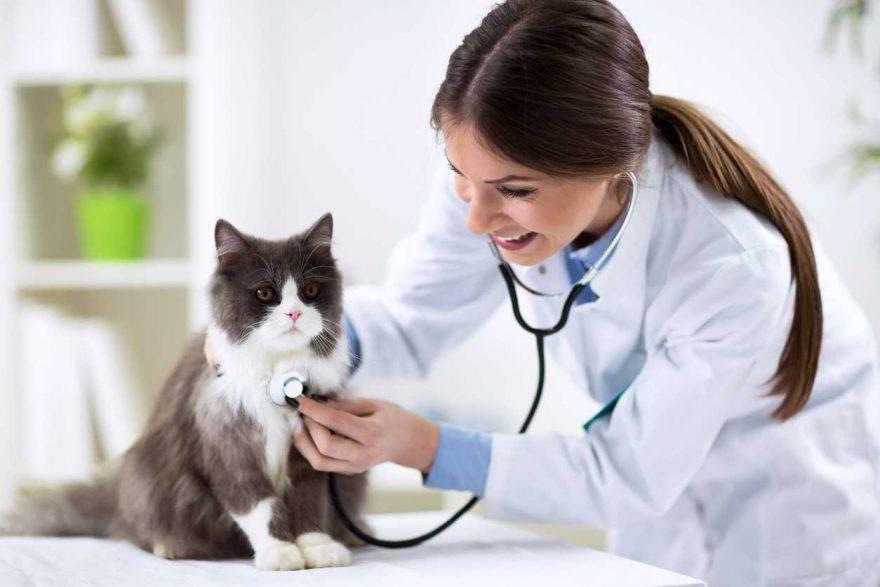 Dieta del gatto malato