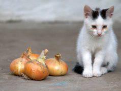 Il gatto ha mangiato la cipolla
