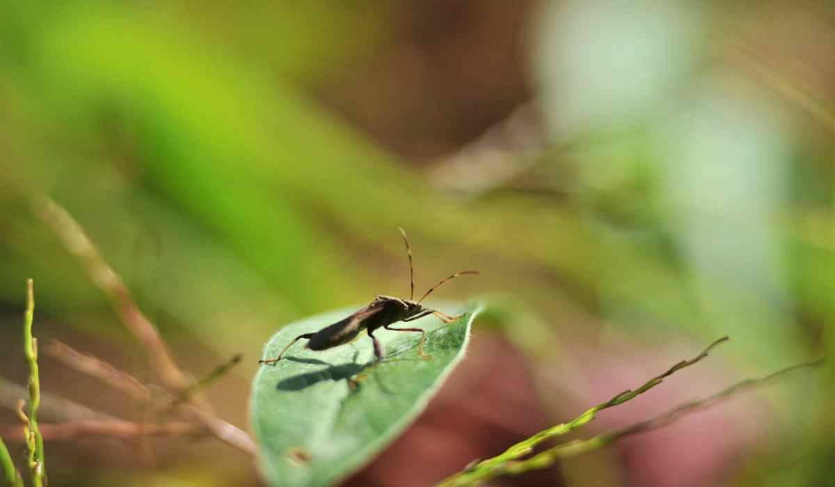 Il problema del calo insetti (Foto Pixabay)