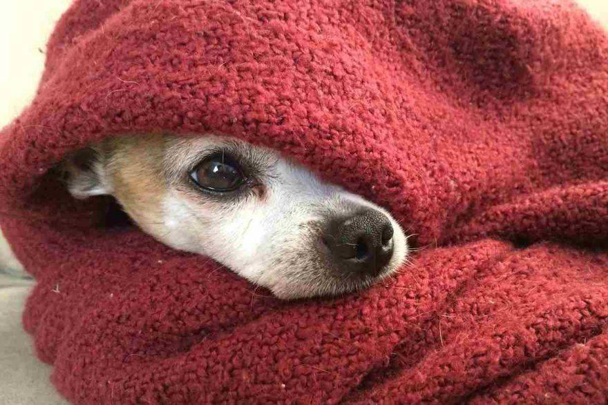 ipotermia nel cane