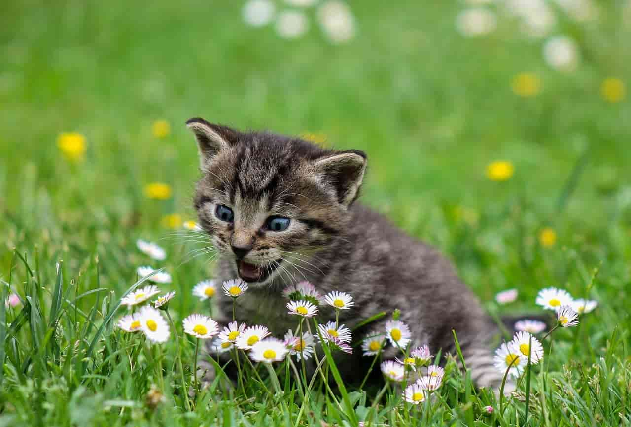 Il micio nel giardino (Foto Pixabay)