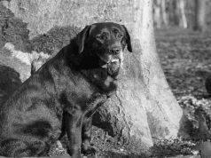 La speranza del cane nonno (Fonte Pixabay)