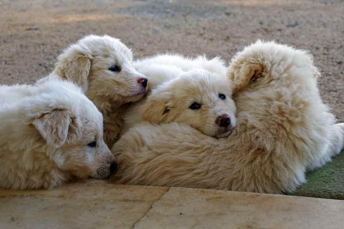 Oroscopo cane del segno dell Acquario