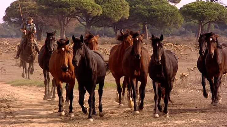cavalli razze italiane