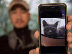 animali scomparsi ace ventura cinese
