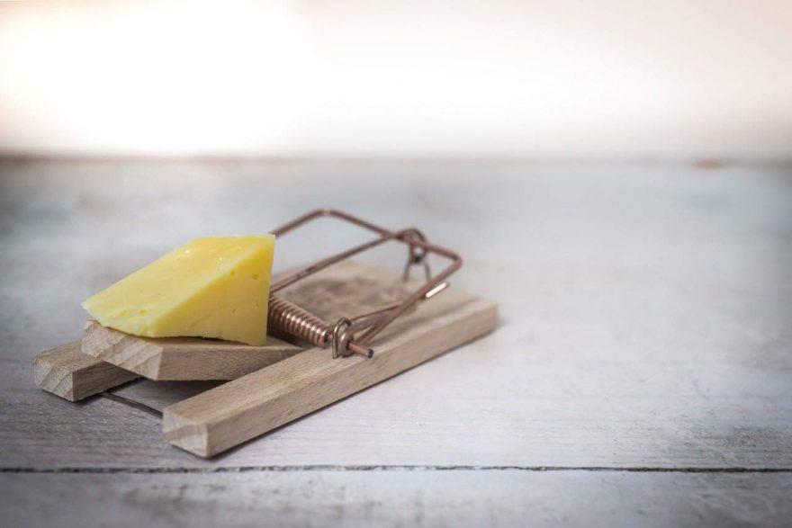 I topi amano il formaggio