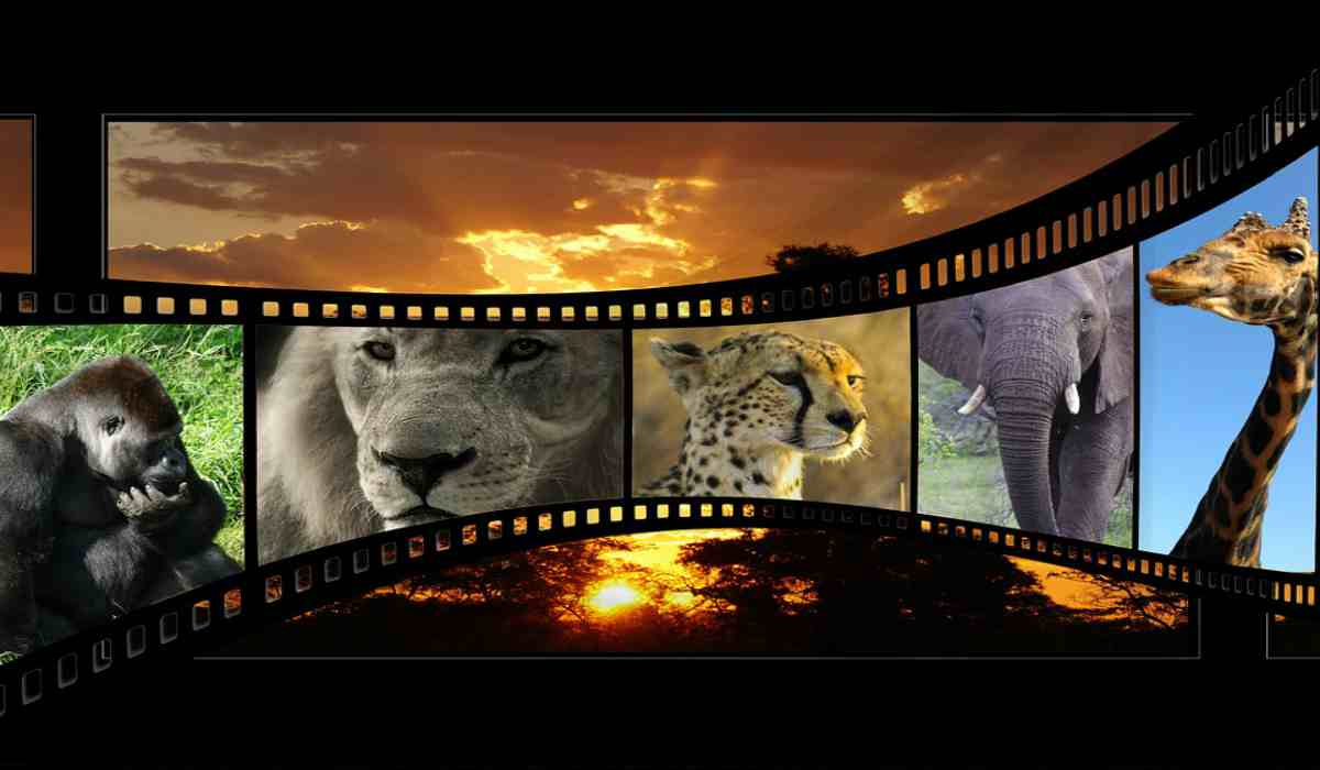 Animali selvatici e foto (Fonte Pixabay)