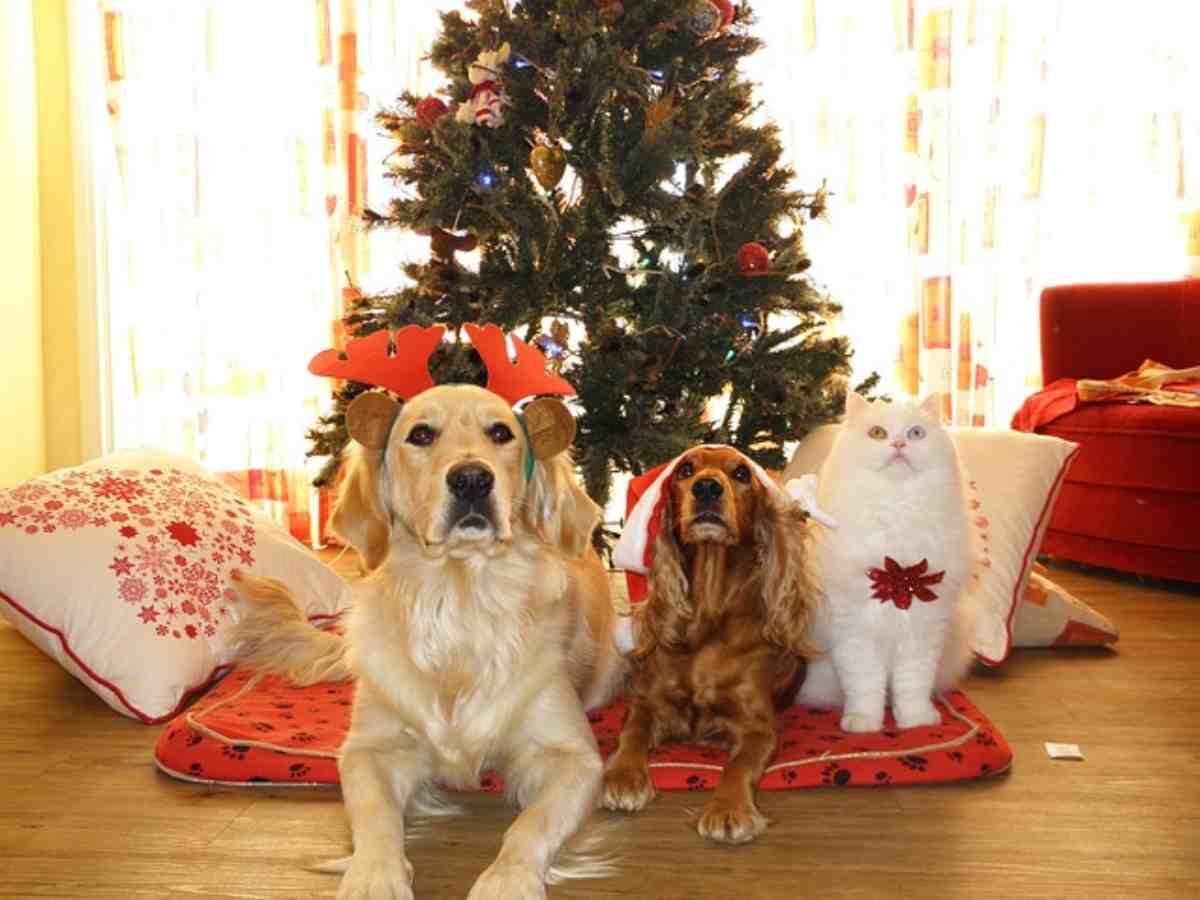 Regalare un cane o un gatto a Natale