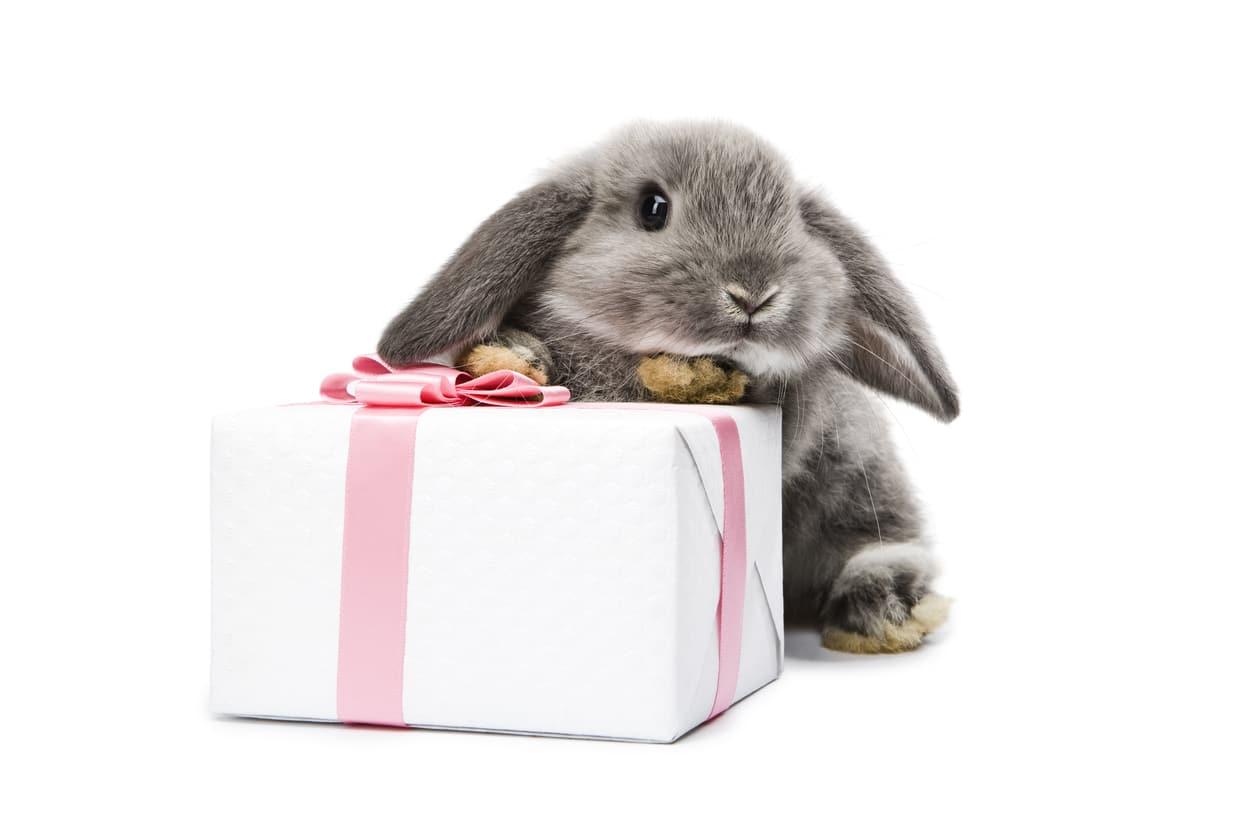regali di Natale per gli amanti degli animali