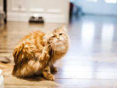 perché gatto si strappa pelo