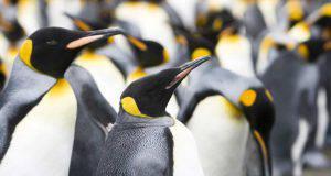 Specie di pinguini