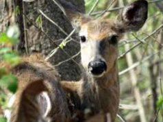 Incidenti stradali animali selvatici