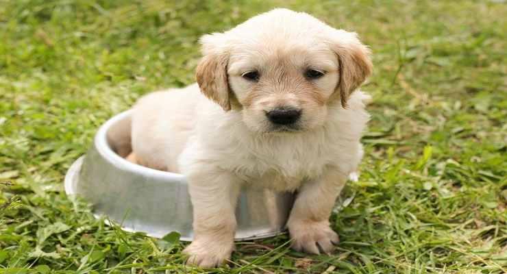Cane e il metodo della ciotola (Fonte Pixabay)