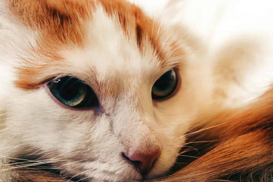 cura gatto anziano