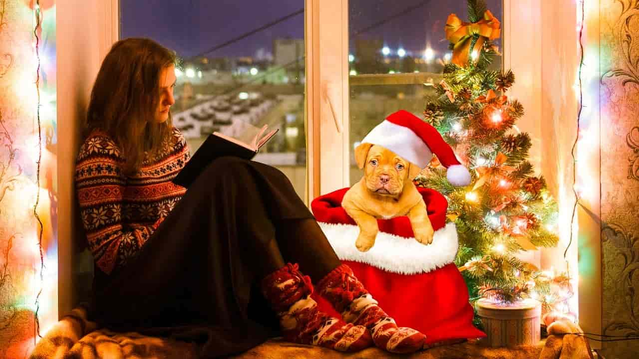 Regali di Natale per chi ama i cani